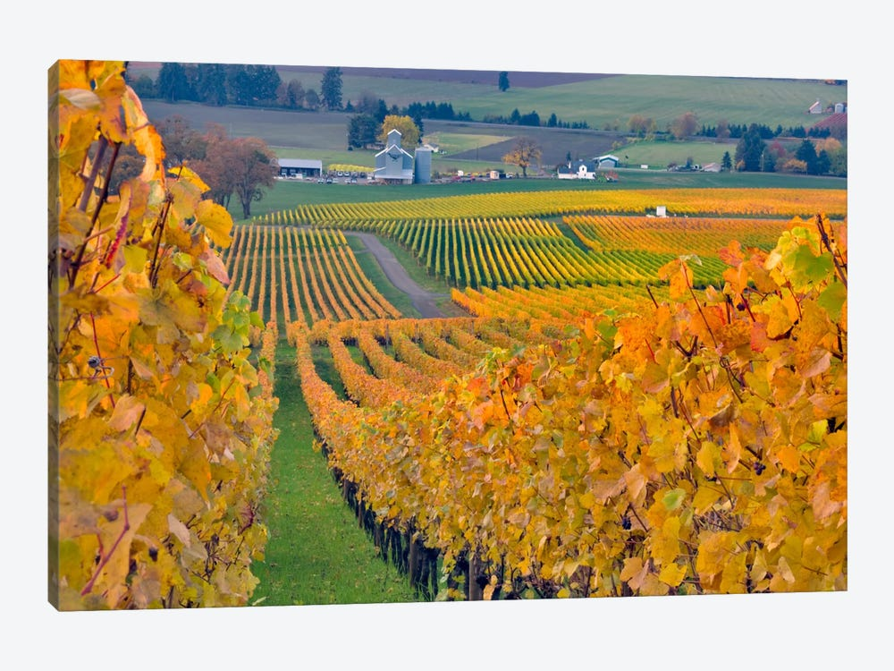 Autumn Vineyard Landscape, Stoller Family Estate, Yamhill County, Oregon, USA by Janis Miglavs 1-piece Canvas Wall Art