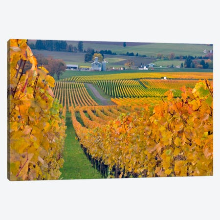 Autumn Vineyard Landscape, Stoller Family Estate, Yamhill County, Oregon, USA Canvas Print #AVS5} by Janis Miglavs Canvas Print