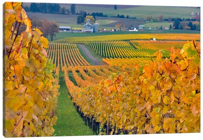 Autumn Vineyard Landscape, Stoller Family Estate, Yamhill County, Oregon, USA Canvas Art Print