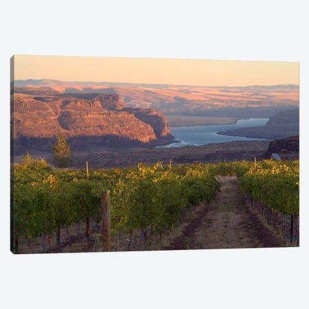 Columbia River With Cave B Vineyard In The Foreground, Grant County, Columbia Valley AVA, Washington, USA Canvas Print #AVS6} by Janis Miglavs Art Print