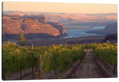 Columbia River With Cave B Vineyard In The Foreground, Grant County, Columbia Valley AVA, Washington, USA Canvas Art Print