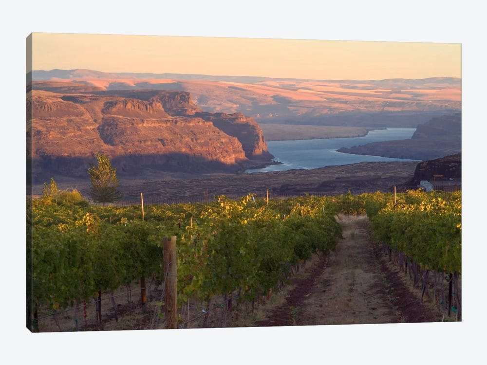Columbia River With Cave B Vineyard In The Foreground, Grant County, Columbia Valley AVA, Washington, USA by Janis Miglavs 1-piece Canvas Print