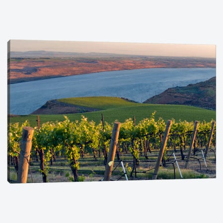 Columbia River With The Benches Vineyard In The Foreground, Horse Heaven Hills AVA, Washington, USA Canvas Print #AVS7} by Janis Miglavs Canvas Art Print
