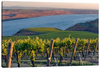 Columbia River With The Benches Vineyard In The Foreground, Horse Heaven Hills AVA, Washington, USA Canvas Art Print