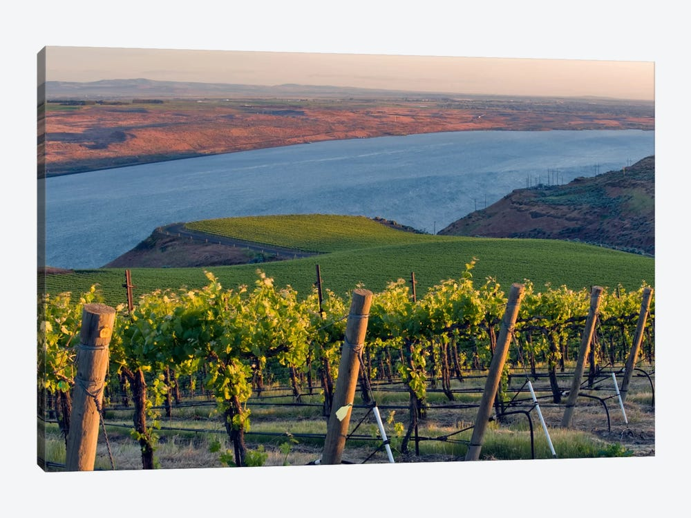 Columbia River With The Benches Vineyard In The Foreground, Horse Heaven Hills AVA, Washington, USA by Janis Miglavs 1-piece Canvas Wall Art