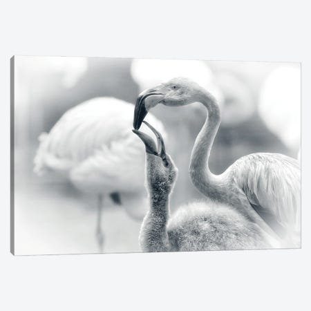 Feeding Canvas Print #AWB13} by Antje Wenner-Braun Canvas Art