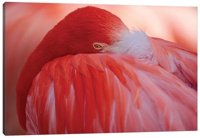 RED Canvas Art Print
