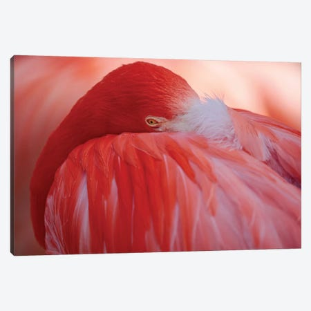 RED Canvas Print #AWB5} by Antje Wenner-Braun Canvas Wall Art