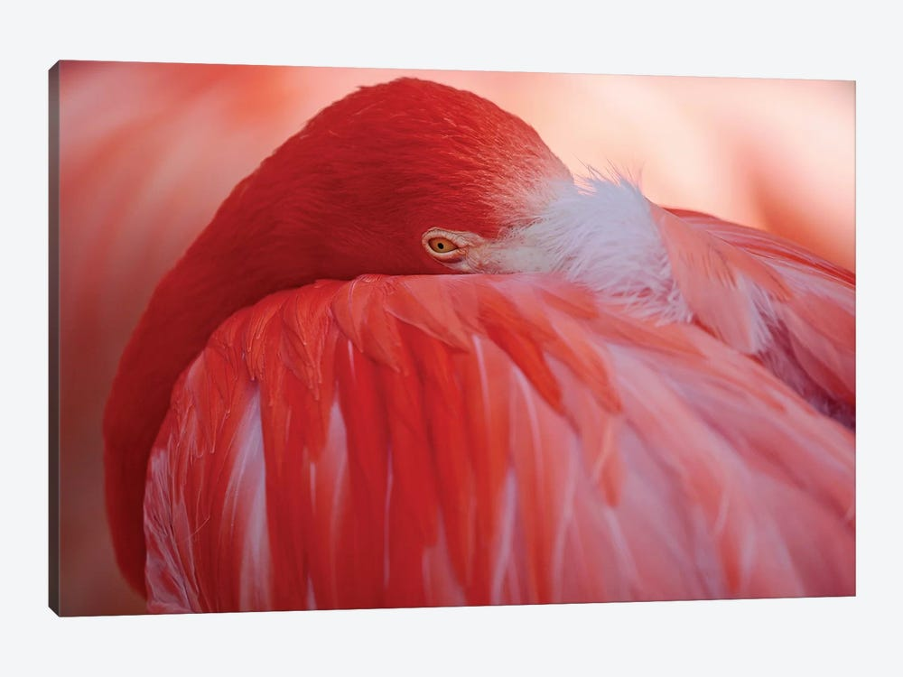 RED by Antje Wenner-Braun 1-piece Canvas Wall Art