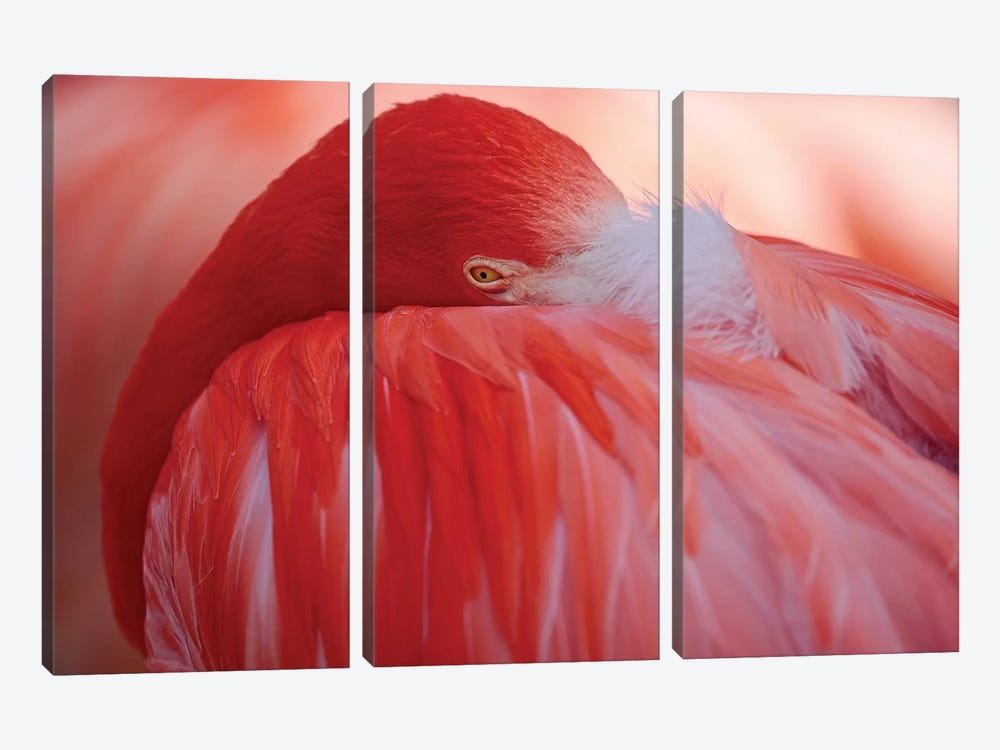 RED by Antje Wenner-Braun 3-piece Canvas Artwork