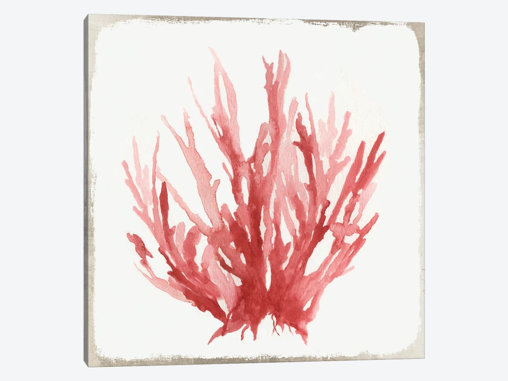 Red Coral I by Aimee Wilson 1-piece Canvas Wall Art