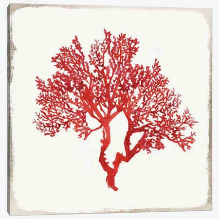 Red Coral II Canvas Print #AWI236} by Aimee Wilson Canvas Artwork
