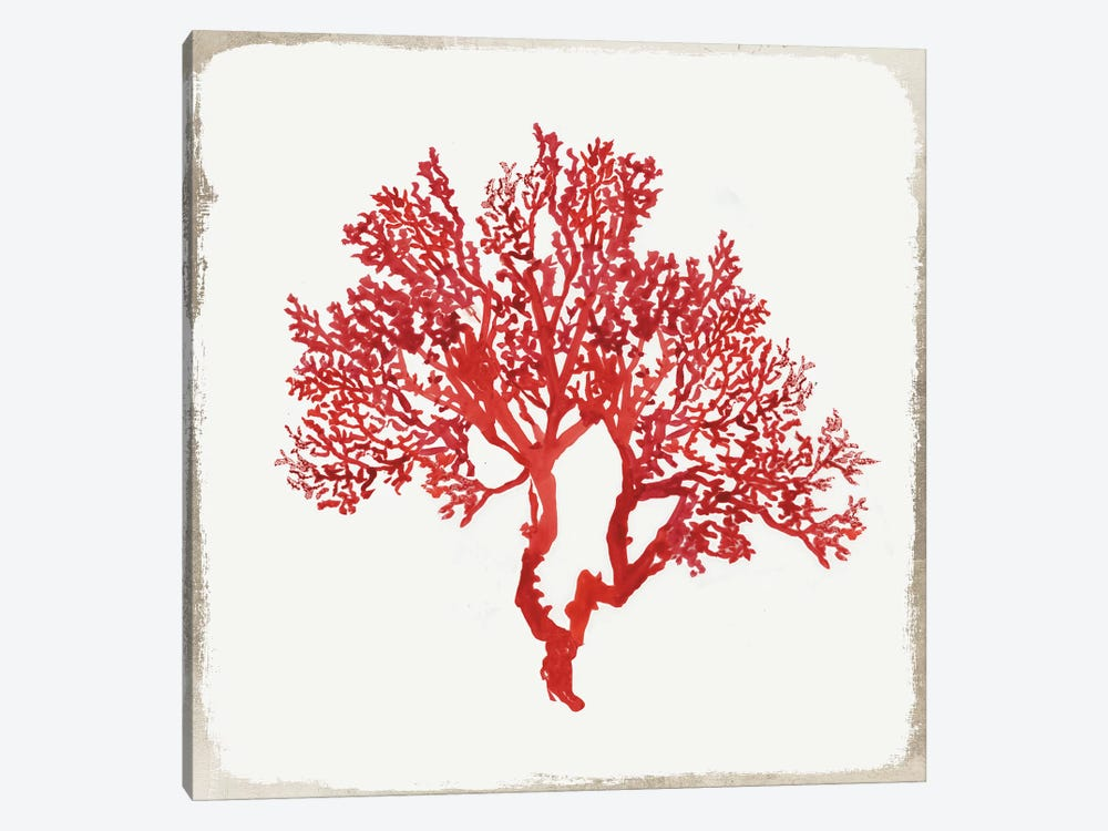 Red Coral II by Aimee Wilson 1-piece Canvas Art Print