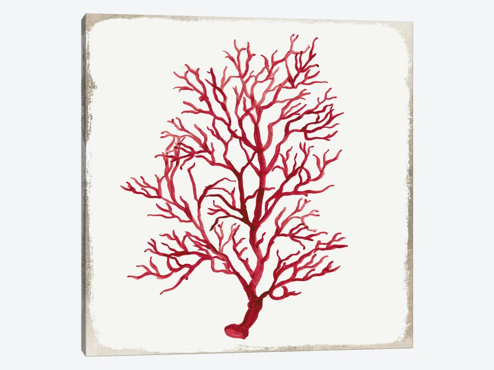Red Coral IV by Aimee Wilson 1-piece Canvas Art Print