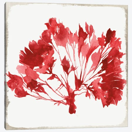 Red Coral VI Canvas Print #AWI240} by Aimee Wilson Canvas Art