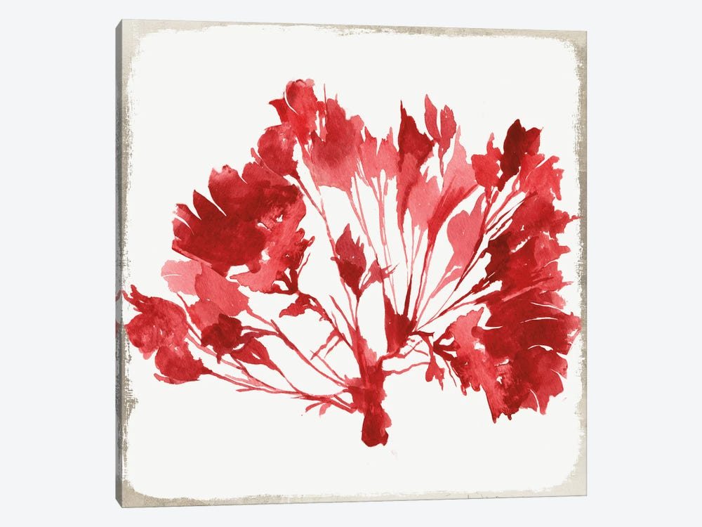 Red Coral VI by Aimee Wilson 1-piece Canvas Artwork