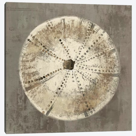 Sand Dollar I Canvas Print #AWI247} by Aimee Wilson Canvas Art Print