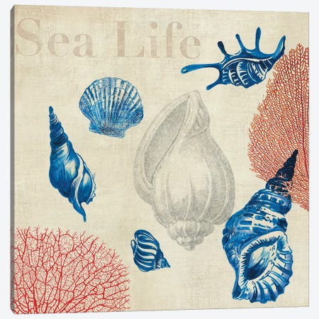 Sea Life Study Canvas Print #AWI249} by Aimee Wilson Canvas Art