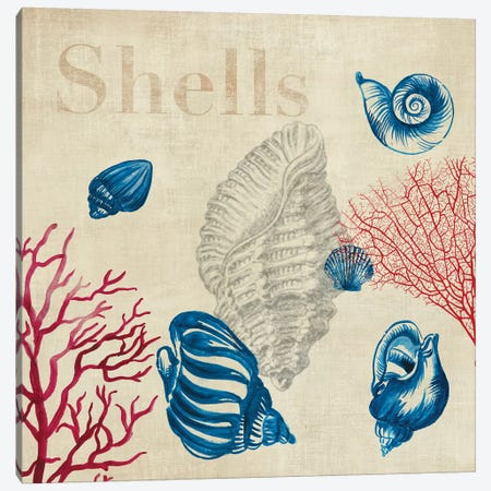Shell Study Canvas Print #AWI256} by Aimee Wilson Canvas Wall Art