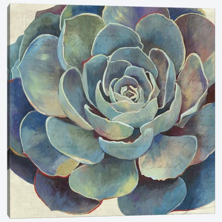 Succulence I Canvas Print #AWI274} by Aimee Wilson Canvas Art