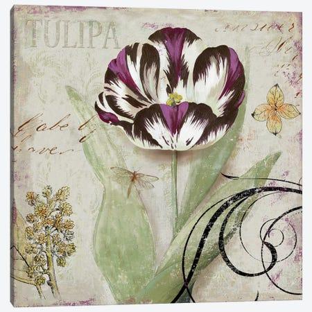 Tulipa II Canvas Print #AWI292} by Aimee Wilson Canvas Print