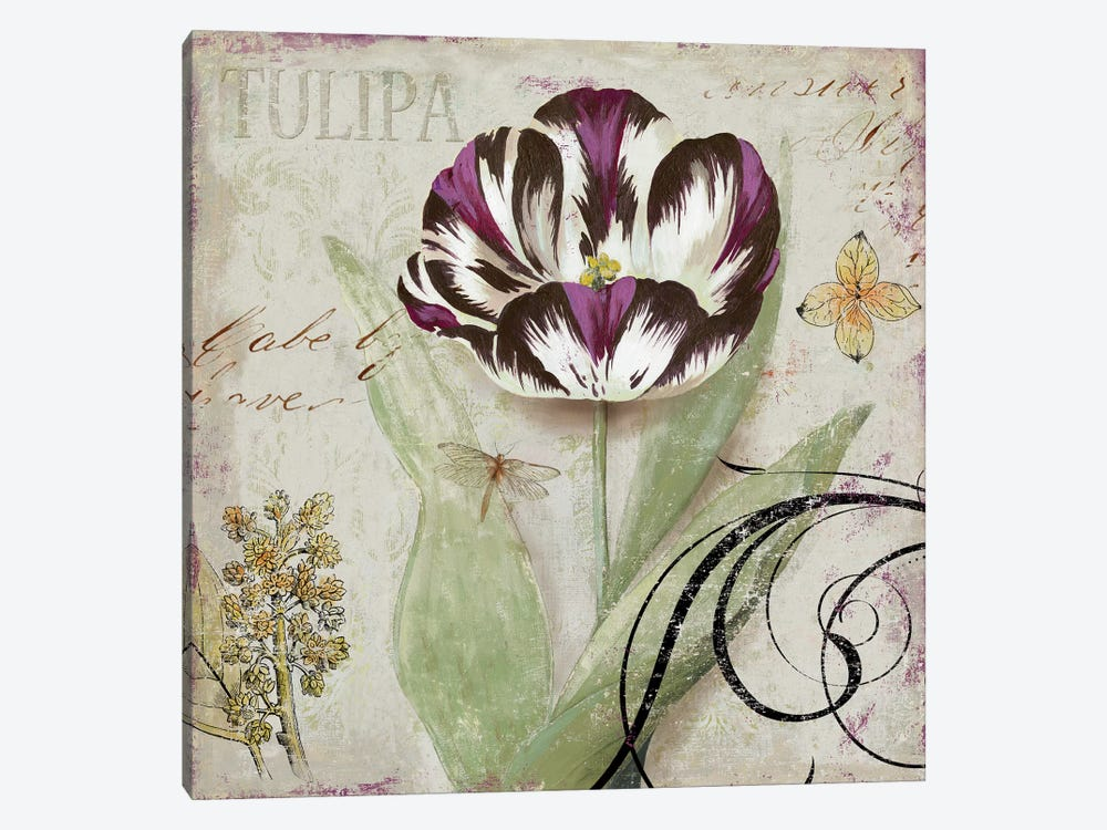 Tulipa II by Aimee Wilson 1-piece Art Print