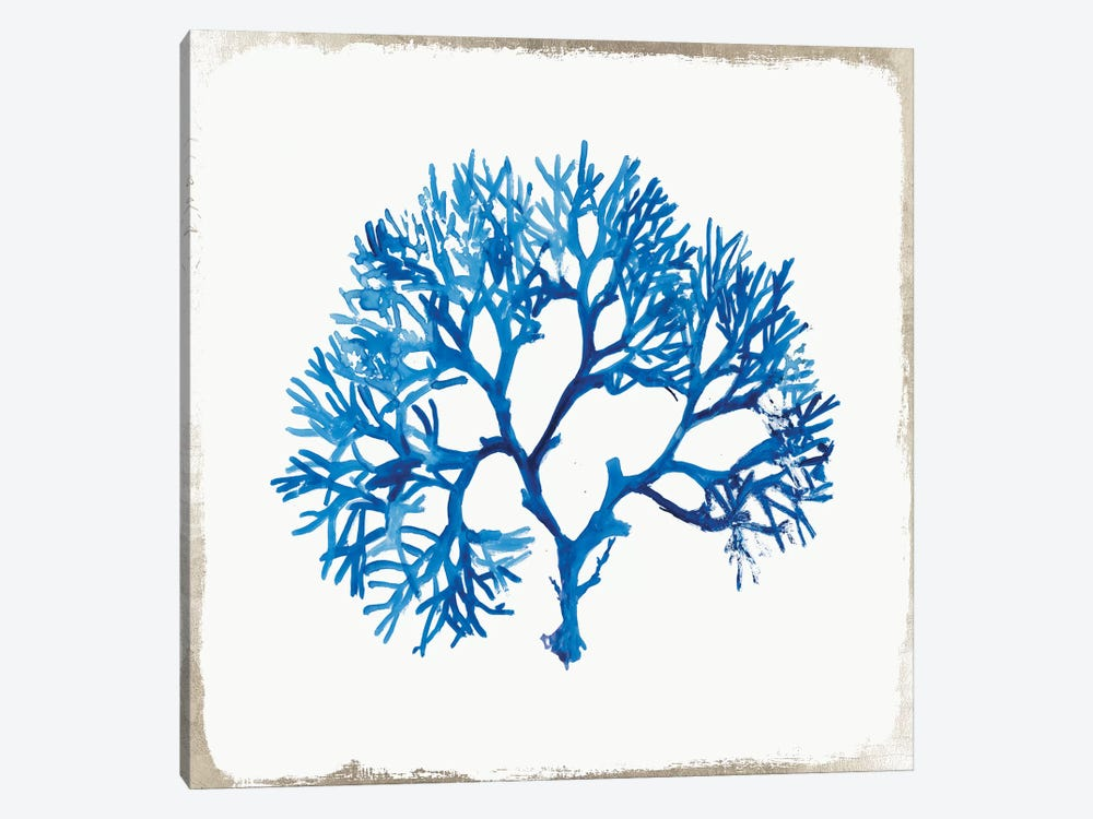 Blue Coral II by Aimee Wilson 1-piece Canvas Wall Art