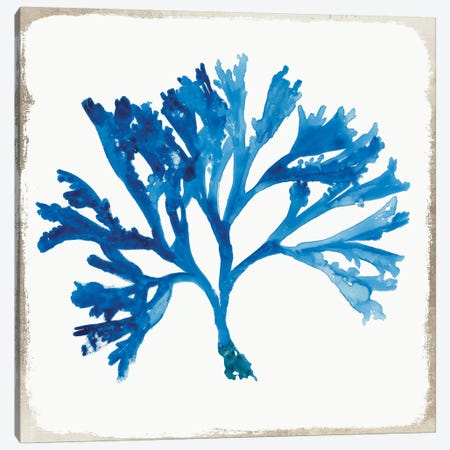Blue Coral VI Canvas Print #AWI35} by Aimee Wilson Canvas Art