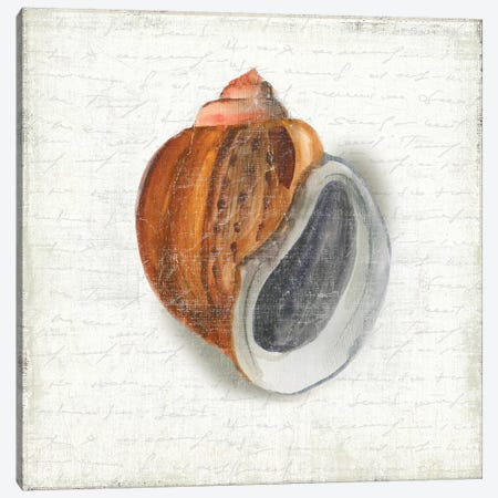 Seashell Portrait I Canvas Print #AWI367} by Aimee Wilson Canvas Wall Art