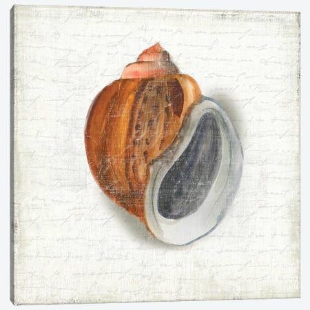 Seashell Portrait I Canvas Print #AWI367} by Aimee Wilson Canvas Wall Art