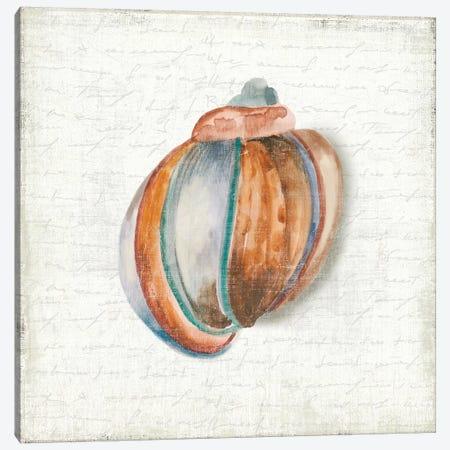 Seashell Portrait II Canvas Print #AWI368} by Aimee Wilson Canvas Print