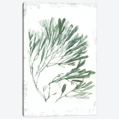 Emerald Coral II  Canvas Print #AWI386} by Aimee Wilson Canvas Artwork