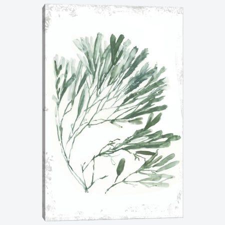 Emerald Coral II  Canvas Print #AWI386} by Aimee Wilson Canvas Artwork
