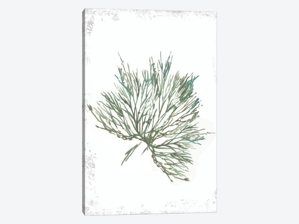 Emerald Coral III  by Aimee Wilson 1-piece Canvas Art