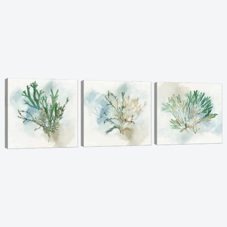 Green Coral Triptych Canvas Print Set #AWI3HSET003} by Aimee Wilson Canvas Print