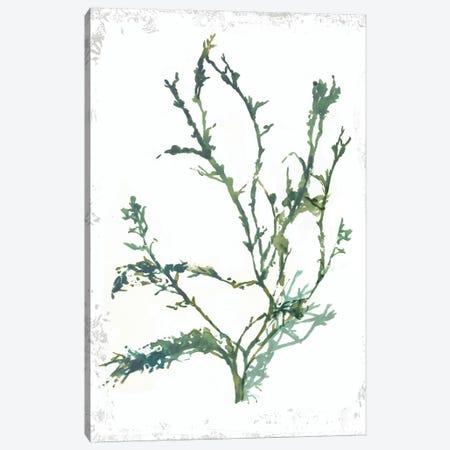 Emerald Coral IV Canvas Print #AWI407} by Aimee Wilson Canvas Print