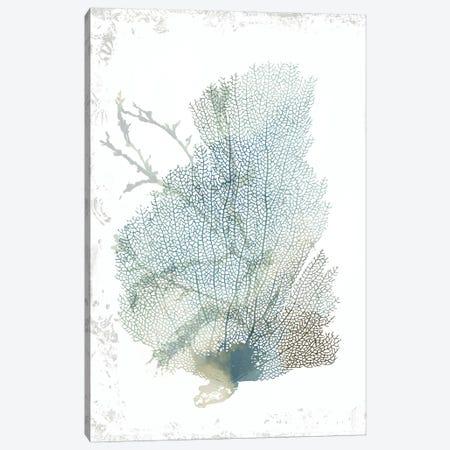 Teal Delicate Coral II  Canvas Print #AWI433} by Aimee Wilson Art Print