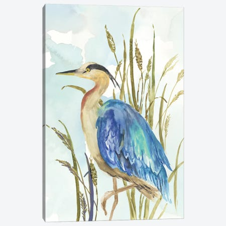 Little Blue Heron Canvas Print #AWI466} by Aimee Wilson Art Print