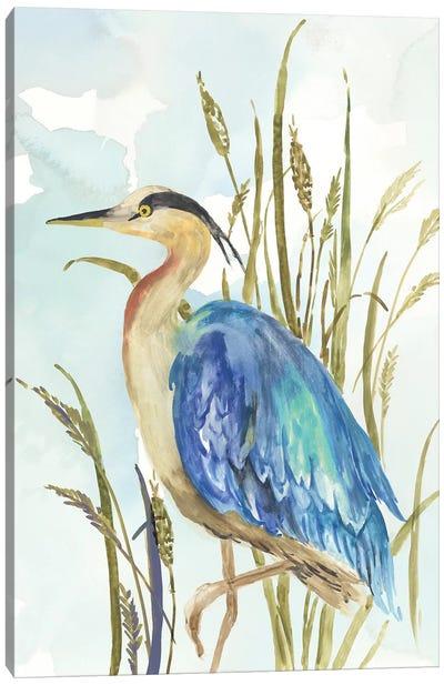 Little Blue Heron Canvas Art Print