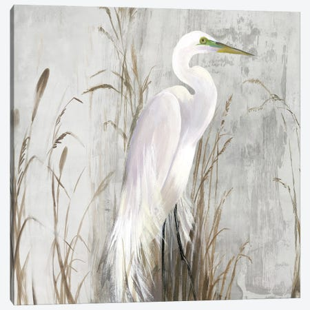 Heron in the Reeds Canvas Print #AWI471} by Aimee Wilson Canvas Print