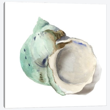 Pearl Shell Canvas Print #AWI473} by Aimee Wilson Art Print