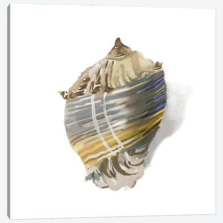Shell Ashore Canvas Print #AWI475} by Aimee Wilson Canvas Artwork