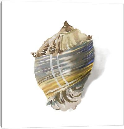 Shell Ashore Canvas Art Print