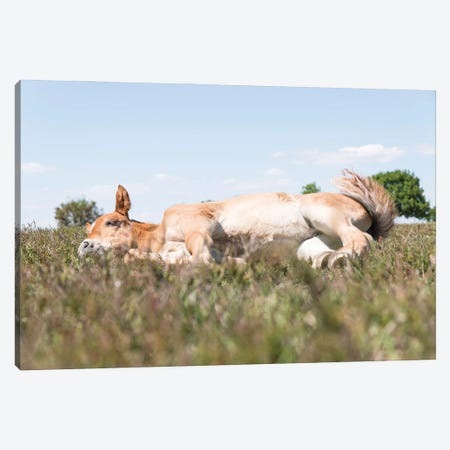 Sleeping Beauty 4. Canvas Print #AWL104} by Andrew Lever Canvas Wall Art