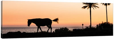Horse and Palms Canvas Art Print