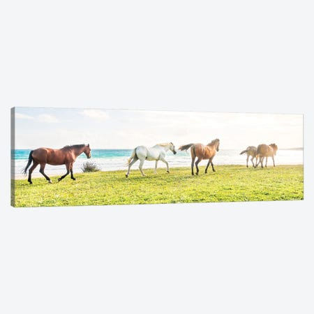 Beach Horses 2. Canvas Print #AWL116} by Andrew Lever Canvas Art Print