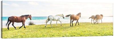 Beach Horses 2. Canvas Art Print