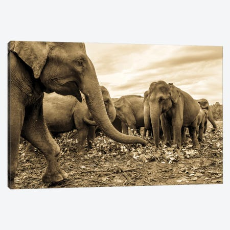 The Herd Canvas Print #AWL118} by Andrew Lever Canvas Wall Art