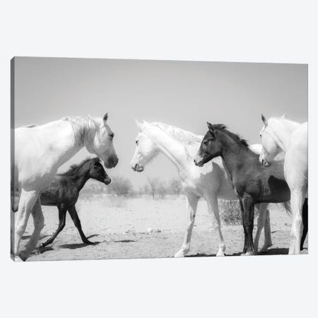 Arab Horse Family Canvas Print #AWL11} by Andrew Lever Canvas Art