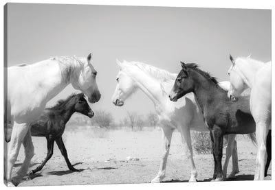 Arab Horse Family Canvas Art Print